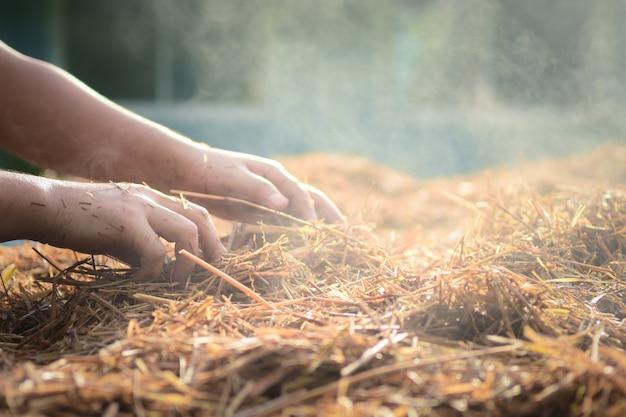 タイの稲わらから栽培されたフクロタケ