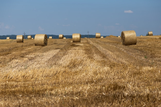 Straw sheaves on the wheat field and sky