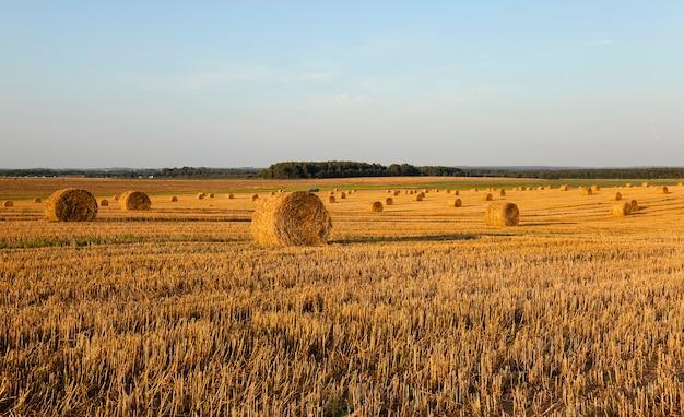 밀짚 더미-곡물 수확 회사에서 촬영 한 밀짚 더미