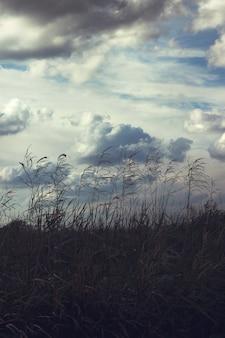 Straw con le nuvole