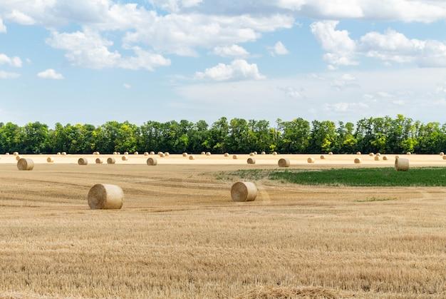 収穫された穀物小麦大麦ライ麦穀物畑、干し草の山strawベールステークスラウンド形状