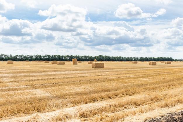 曇りの青い空に干し草の山のstrawの棒で収穫された穀物穀物小麦大麦ライ麦穀物畑。農業農業農村経済農学コンセプト