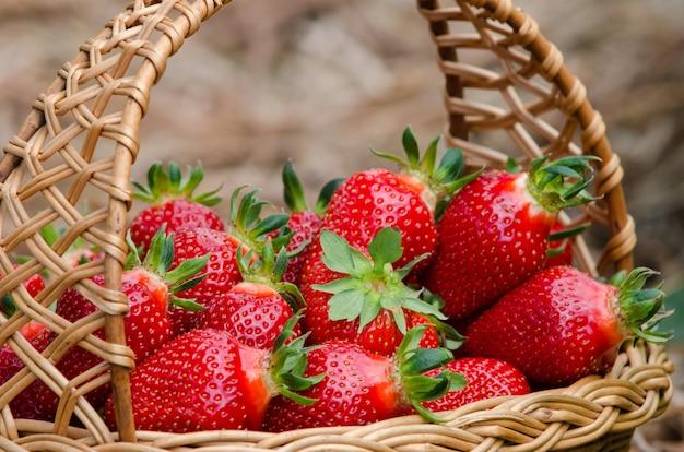 Strawberries in the basket inside greenhouse grown