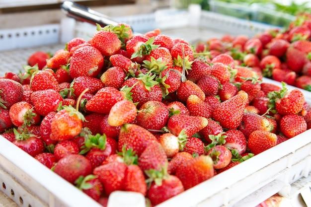 農場市場で販売されている箱に入ったイチゴ