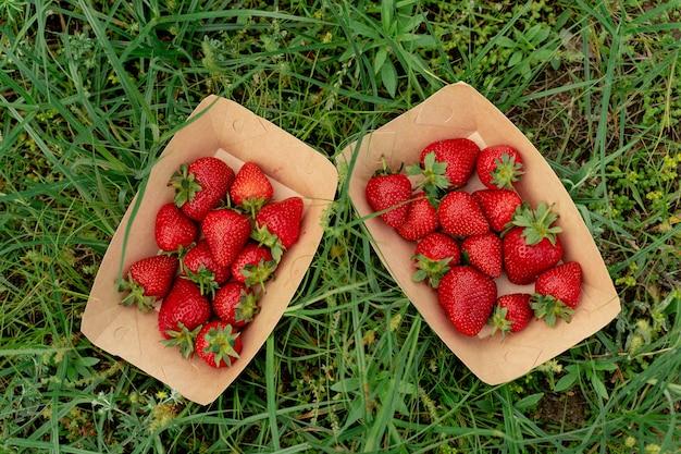 녹색 잔디 배경에 에코 접시에 딸기