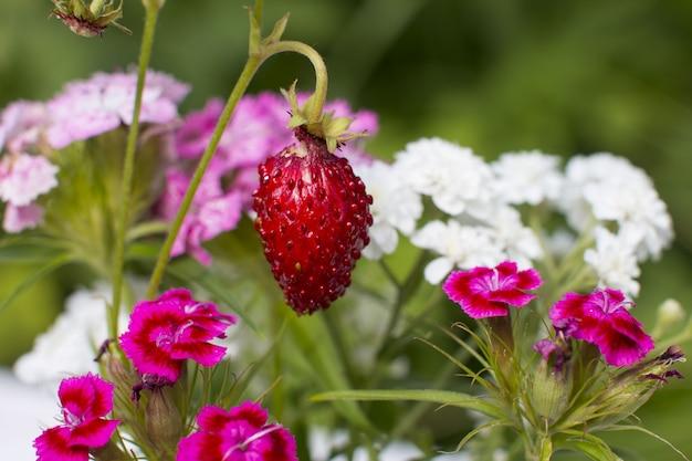 꽃병에 딸기 꽃다발입니다. 딸기 수확