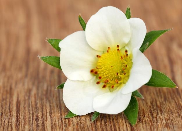 Цветок клубники на деревянной поверхности