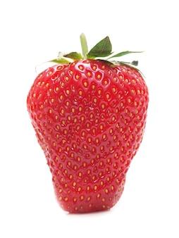 딸기 과일