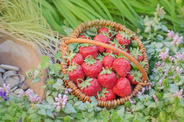 自然の背景にイチゴ。かごの中のイチゴ。コピースペースのある上面図。
