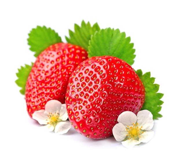 白の花とイチゴ