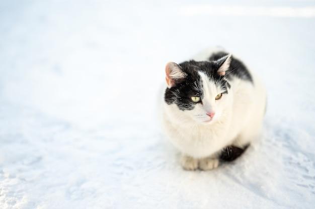 눈 속에서 길 잃은 노숙자 고양이. 슬픈 길 잃은 고양이는 눈에 얼어 붙습니다. 겨울에 길 잃은 동물. 초상화 버려진 고양이 얼어 붙은 거리.