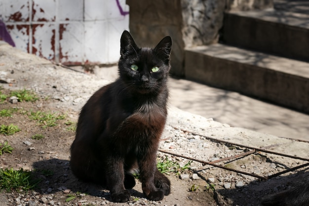 Stray black cat is sitting in the backyard. mystical black cat with green eyes. deep-brown street cat in an abandoned place.