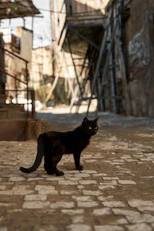 A stray black cat walks in the alley