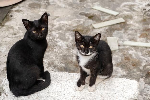 거리에서 그녀의 형제와 함께 길 잃은 검은 고양이