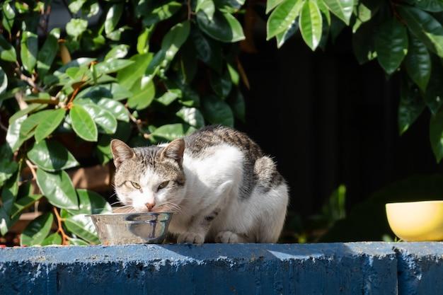 Бродячая кошка ест еду на улице в городе