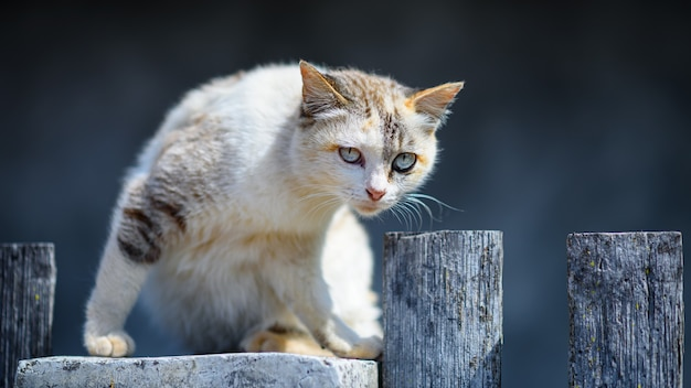 Stray cat on fence in sunny day