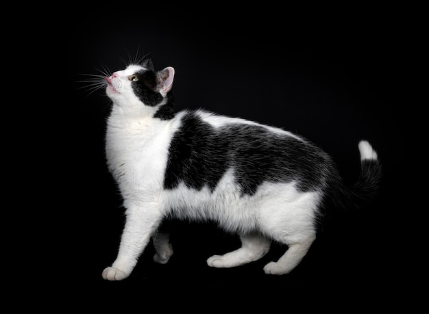 Stray cat in front of black background