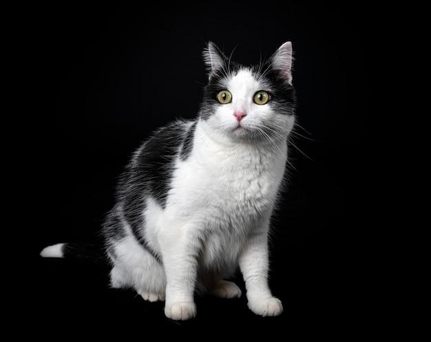 Бродячая кошка на черном фоне