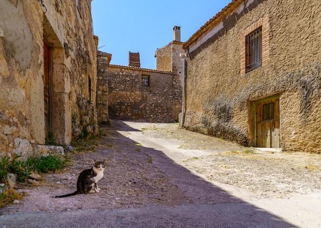 스페인의 오래 된 돌 마을 거리에서 길 잃은 고양이.