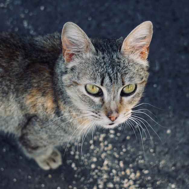 Stray cat portrait in the street in the nature
