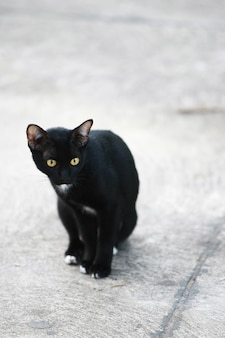 Stray cat searching for food on the street