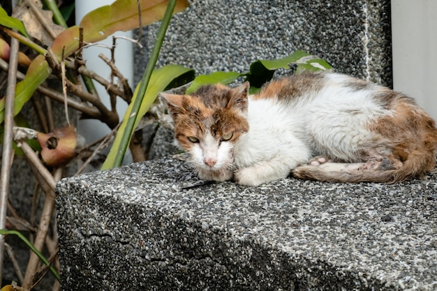 길 잃은 고양이는 아프고 거리에서 침을 흘리고