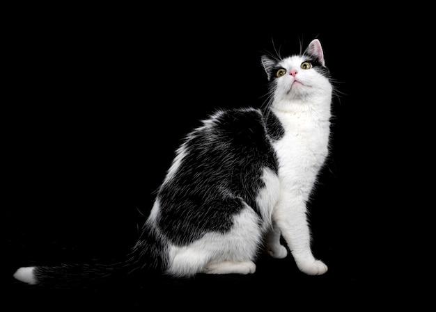 Бездомная кошка Premium Фотографии