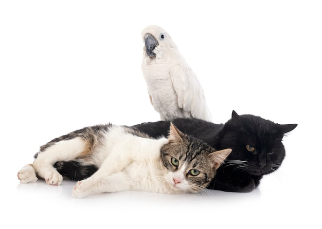 Stray cats and cockatoo