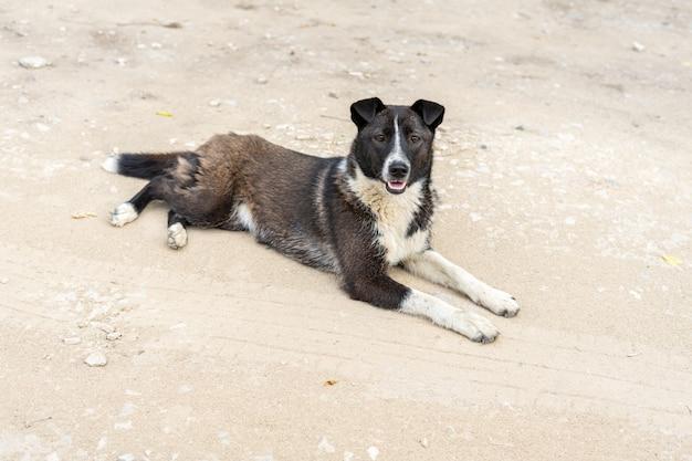 Бродячая собака лежит на грунтовой дороге