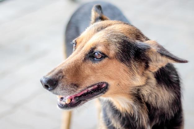 マスター、肖像画のクローズアップを探している野良犬