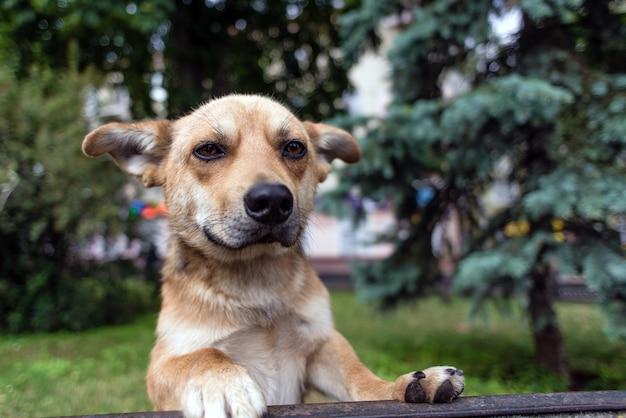 迷い犬はカメラにまっすぐに見て