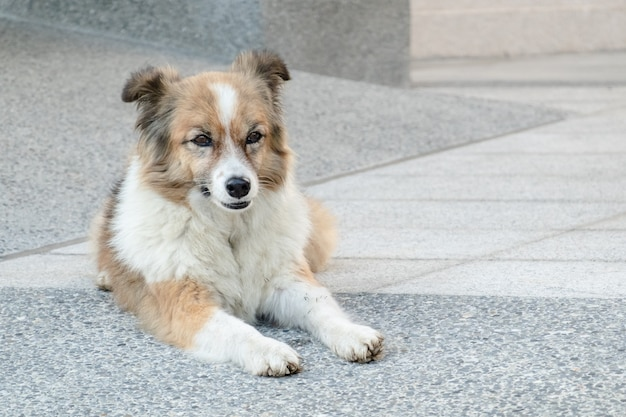 Stray dog lying on a ground in the city