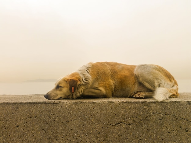 Stray dog lying on the pavement