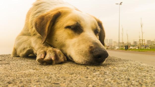 Stray dog sitting on the pavement