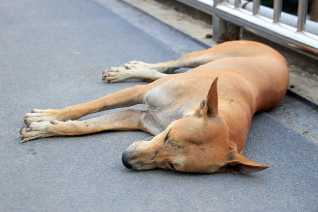 Stray dog sleep on the ground