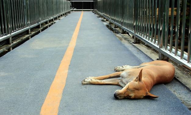 길 잃은 개 수면