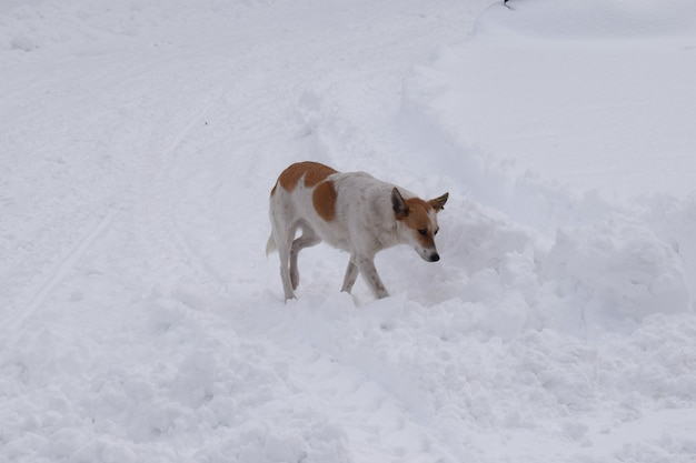 A stray dog walks in the snow-covered park