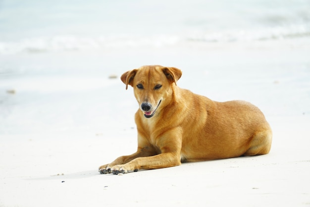 A stray dog with golden hair sleeps on the beach
