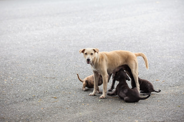 Stray dogs are breast-feeding a baby.