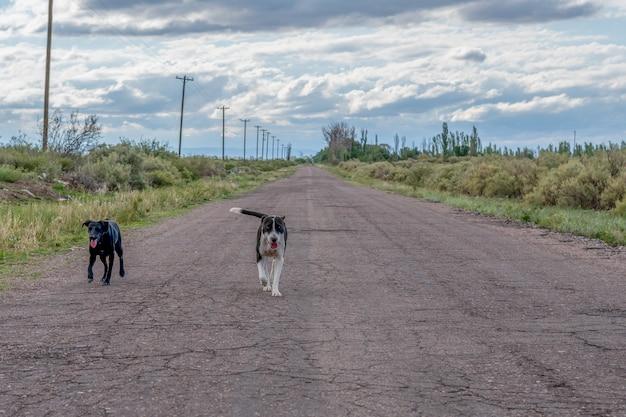 田舎道の野良犬