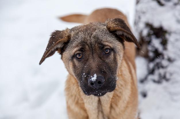 밖은 겨울에 슬픈 눈을 가진 떠돌이 개. 배고픈 강아지는 거리에 살고 겨울에는 추위에 얼어 붙습니다.