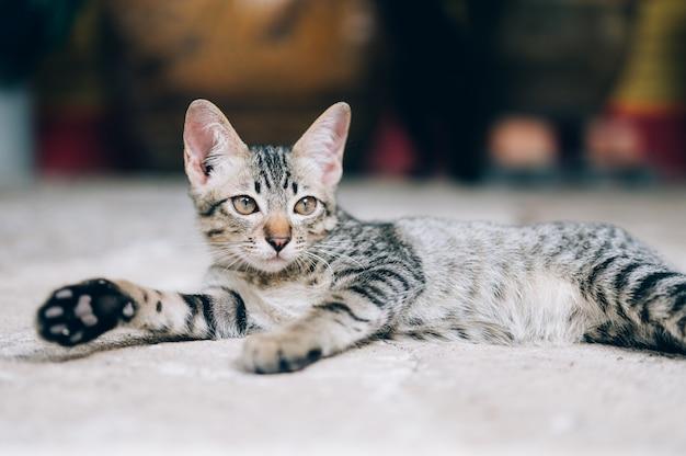 通りを見ている灰色の野良猫