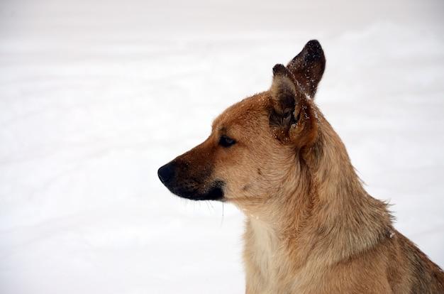 A stray homeless dog. portrait of a sad orange dog on a snowy background
