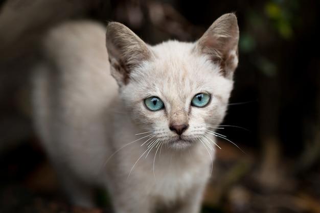 Stray kitten (homeless cat) sadness with blue eyes.