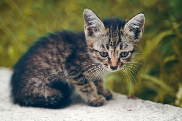 The stray kitten.
