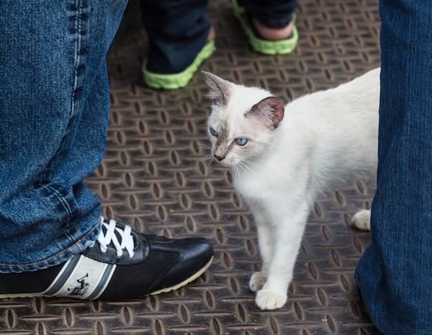 Stray little siamese kitten
