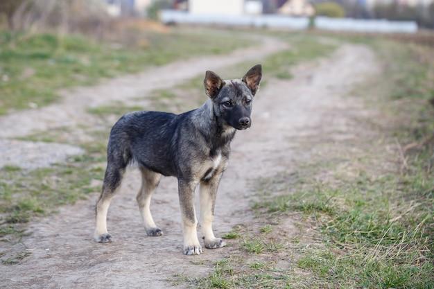 動物や自然を守る、路上での野良犬