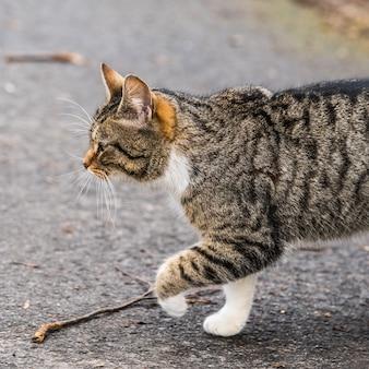 Бродячая полосатая кошка идет по дороге. уличная кошка в поисках еды