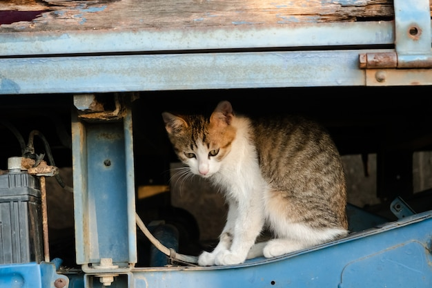 Бродячая черепаховая кошка ест еду на улице