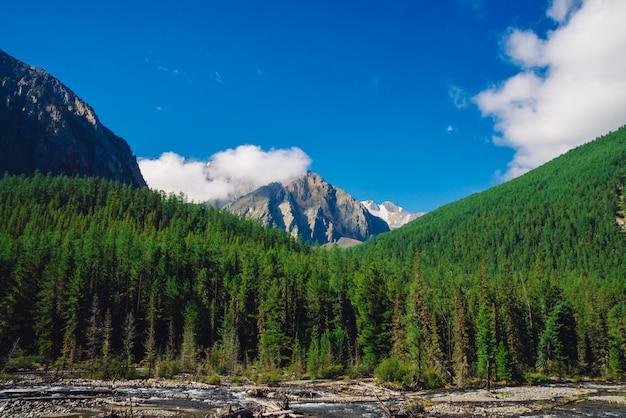 Stream along forest edge